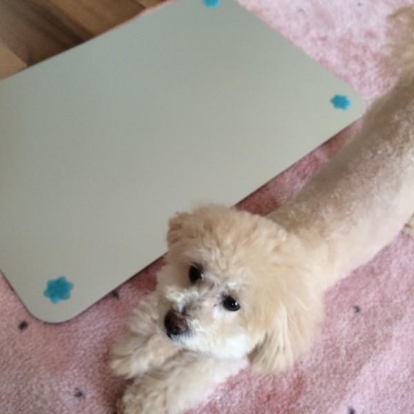 犬と、ひんやりマット