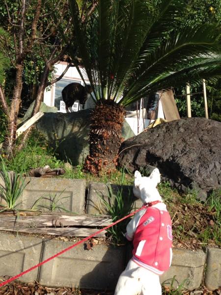 右下に犬、岩の上に猫
