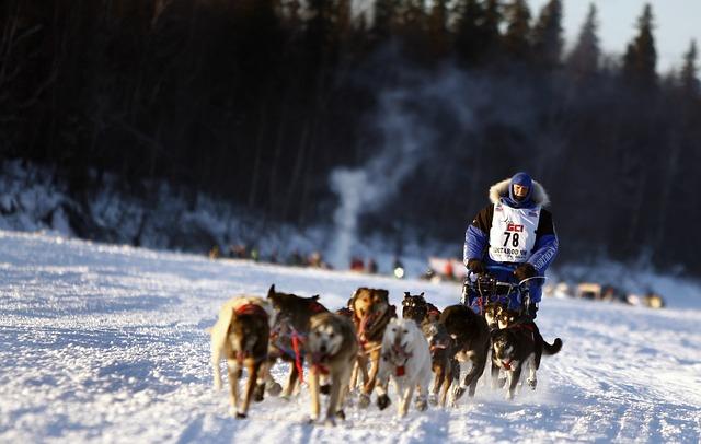 シベリアンハスキーレース