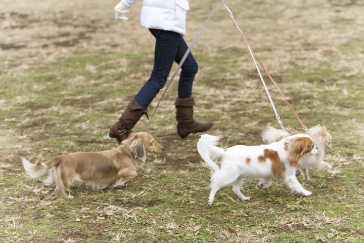走る犬と飼い主