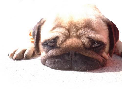 犬の発情期