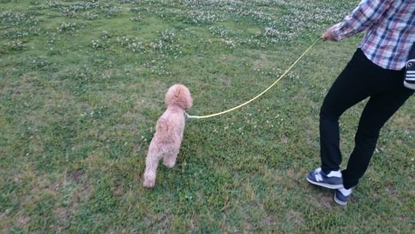 芝生を一緒に歩いている