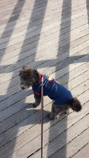 青い服を着た犬