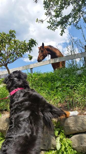馬とバーニーズ
