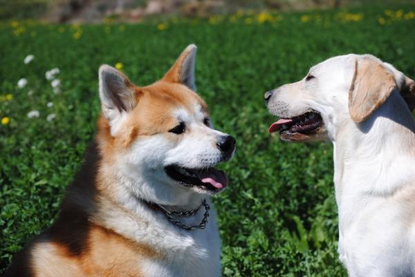 向かい合う2匹の犬