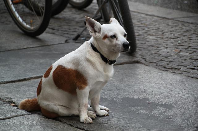 大人しく座る犬
