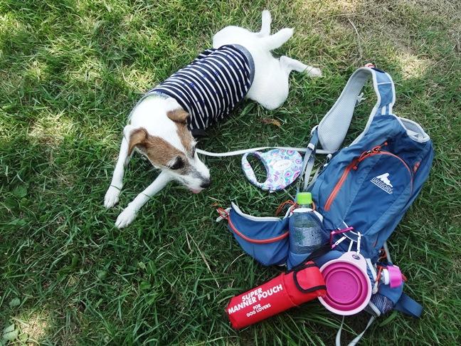犬と携帯用フードボール