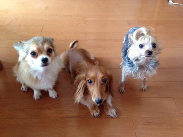 犬3匹の写真