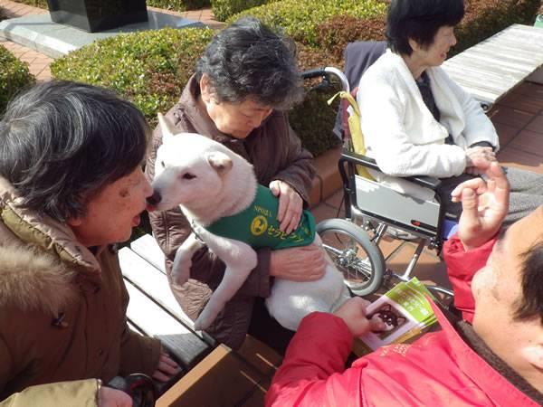日本アニマルセラピー協会の画像