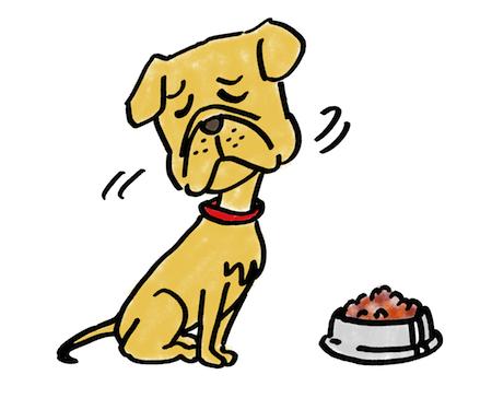 食事を食べない犬