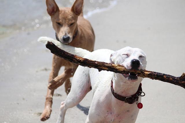 棒を噛む犬