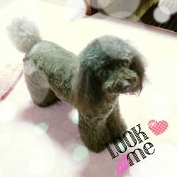 ももさく~momo-saku~犬と猫のための仕立て屋さん(店長日記)