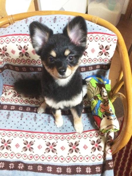 お座りしている犬の写真