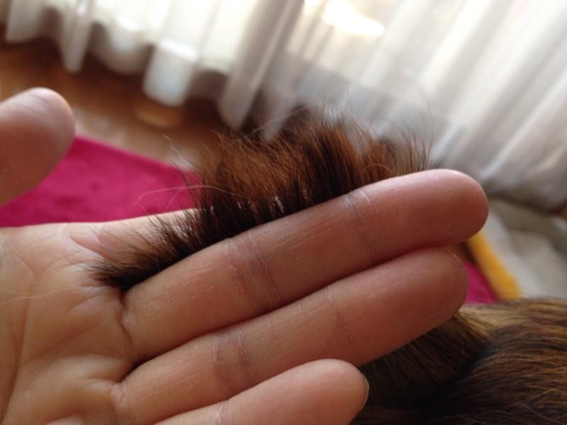 指を使って毛をもっている写真