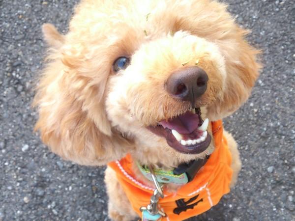 オレンジの服を着て笑顔