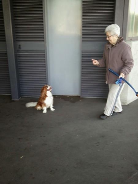おばあちゃんが愛犬に指示