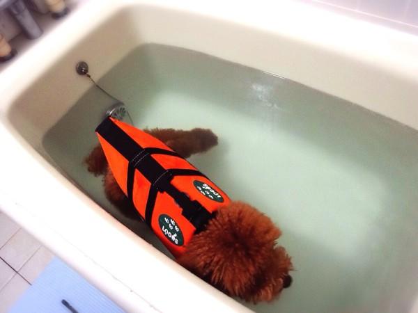 ワンちゃん、自宅で健康プール