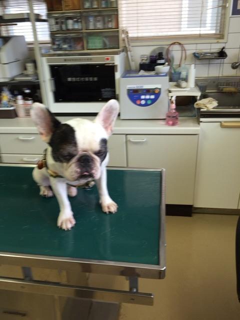 診察する犬