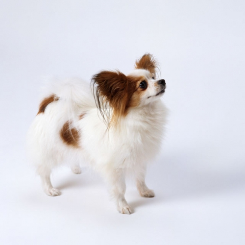 ##犬を飼うにあたって##