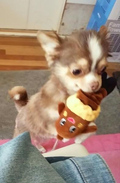 奪い去る瞬間の愛犬