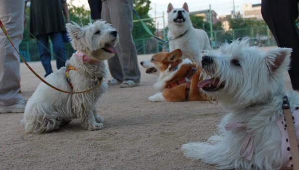 複数の犬がパンティング中
