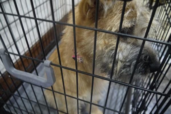 横をむく犬 ボサボサ毛