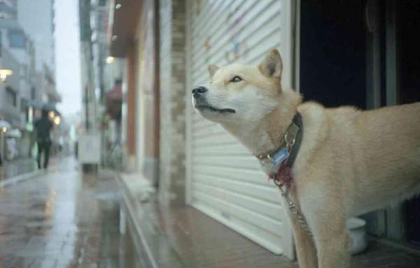 シャッターの犬