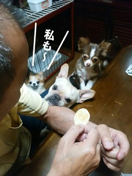 父と3匹の愛犬