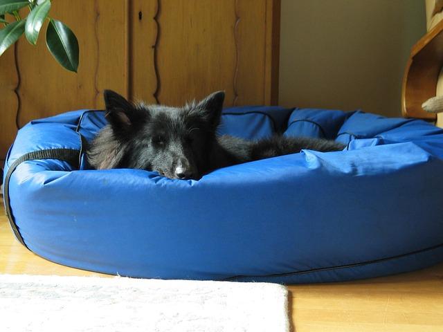 ベットで休む犬