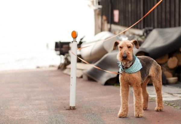待機する犬