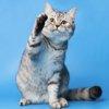 猫パンチの意味