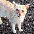 目が腫れてしまった猫…摘出か現状維持か事態の行方は?