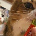 【先住猫 × 新入り子猫】少しずつ縮まっていく距離に胸キュン!