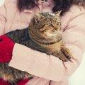 猫の手袋おすすめ8選!種類や選び方