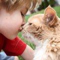 猫との『挨拶の仕方』4選!信頼度が丸わかりになるかも?