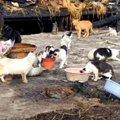 飼い主さんが火事で…残された20匹の猫たちの行方は?vol.1