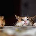猫の習性!飼い主なら知っておきたい5つの行動の意味