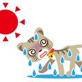 猫が熱中症になる原因や応急処置について