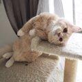 猫のミロちゃんの謎のポーズ集