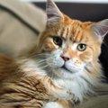 猫の『先端巨大症』とは?糖尿病との関係