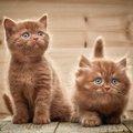 猫を多頭飼いする時のおすすめケージ5選!選び方や使うメリットまで