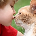 猫が鼻チューをする理由とは?飼い主に、猫同士でする時の意味
