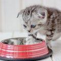 なぜ?!猫が自分のごはんに『猫パンチ』する理由5つ