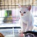 猫用ケージの必要性と簡易的な手作りケージのご紹介!