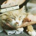 猫の毛球症ってどんな病気?その症状と対策とは