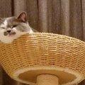 『ぴょこんっ』足で返事をする猫さんが可愛すぎると話題に♡