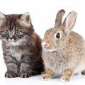 猫とうさぎを一緒に飼うためのコツ