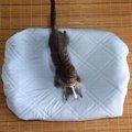 冷感接触の生地で猫ベッドのシーツを作りました。