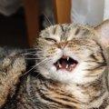 猫の鼻水の量が増えたときに考えられること3つ