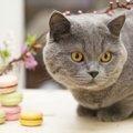 猫のスイーツおすすめ商品5選!贈り物や支援に繋がるかわいいお菓子